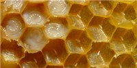 image: Image of the Day: Honeycomb Home