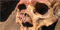 image: Bronze Age Plague Sequenced