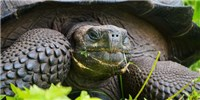 image: Image of the Day: Ninja Tortoise