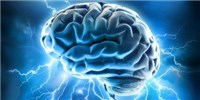 image: European Brain Project Extended