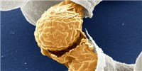image: Image of the Day: Baby Yeast