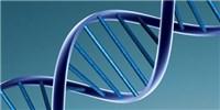 image: Cas9 Proofreads Gene Edits