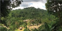 image: A Rainforest Chorus