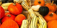 image: Pumpkins Saved By People?