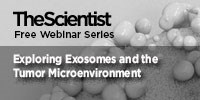 image: Exploring Exosomes and the Tumor Microenvironment