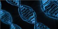 image: A More-Precise CRISPR/Cas9