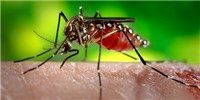 image: First Dengue Vax Approved
