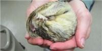 image: Heart-Healthy Hibernators