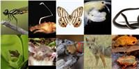 image: New Species Abound