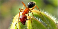 image: Epigenetic Alterations Determine Ant Behavior