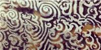 image: Image of the Day: Tortoiseshell Twists