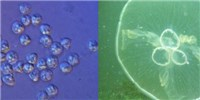 image: Genome Digest