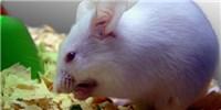 image: Gut Microbes Need Fiber, Too