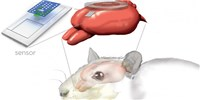 image: Bioresorbable Brain Implants