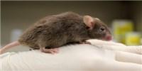 image: Surrogate Genes Enable Reproduction