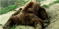 image: Hibernation Helpers