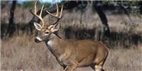 image: Malarial Parasite Found in Deer