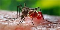 image: Zika Update