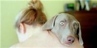 image: Opinion: On Animal Emotions