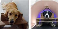 image: Probing Canine Face Recognition