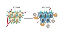 image: MYC Helps Cancer Hide