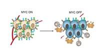 image: MYC Helps Cancer Hide