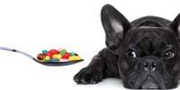 image: Pet Scans