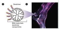image: Tumor-Shrinking Triple-Helices