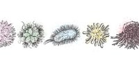 image: Microbes Meet Cancer
