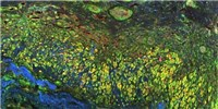 image: Image of the Day: Monet-esque Micrograph