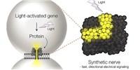image: Next Generation: Toward Synthetic Neural Tissue