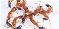 image: Image of the Day: The Ant Police