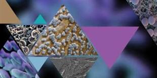 Nanoscale Defenses
