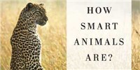 image: Book Excerpt from <em>Are We Smart Enough to Know How Smart Animals Are?</em>