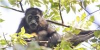 image: Monkey See, Monkey Die