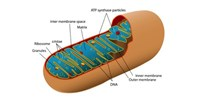 image: Bill Banning Mitochondrial Replacement Therapy Considered