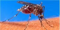 image: House Passes Watered-Down Zika Aid Bill