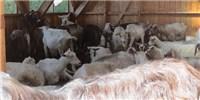 image: Antibody Maker Loses License Over Animal Welfare Violations