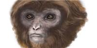 image: New Species Celebrated