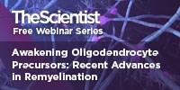 image: Awakening Oligodendrocyte Precursors: Recent Advances in Remyelination