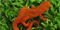 image: Image of the Day: Waning Wildlife