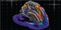 image: How Dopamine Tunes Working Memory
