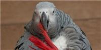 image: Bird Brains Have Numerous Neurons