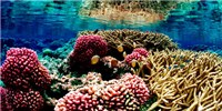 image: Identifying Resilient Reefs