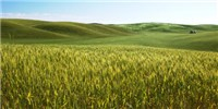 image: Study: Farming Arose Twice in the Ancient Middle East