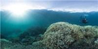 image: Changing Oceans Breed Disease