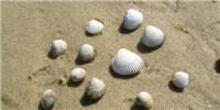 image: Transmissible Cancers Plague Mollusks