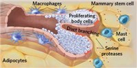 image: Immune Cells' Role in Tissue Maintenance and Repair