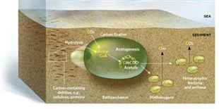 image: Archaea's Role in Carbon Cycle