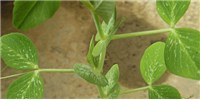 image: Evidence of Risk Assessment in Plants Reported